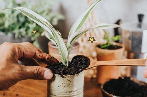 8 Pilihan Pupuk Terbaik Untuk Bunga yang Tumbuh Subur
